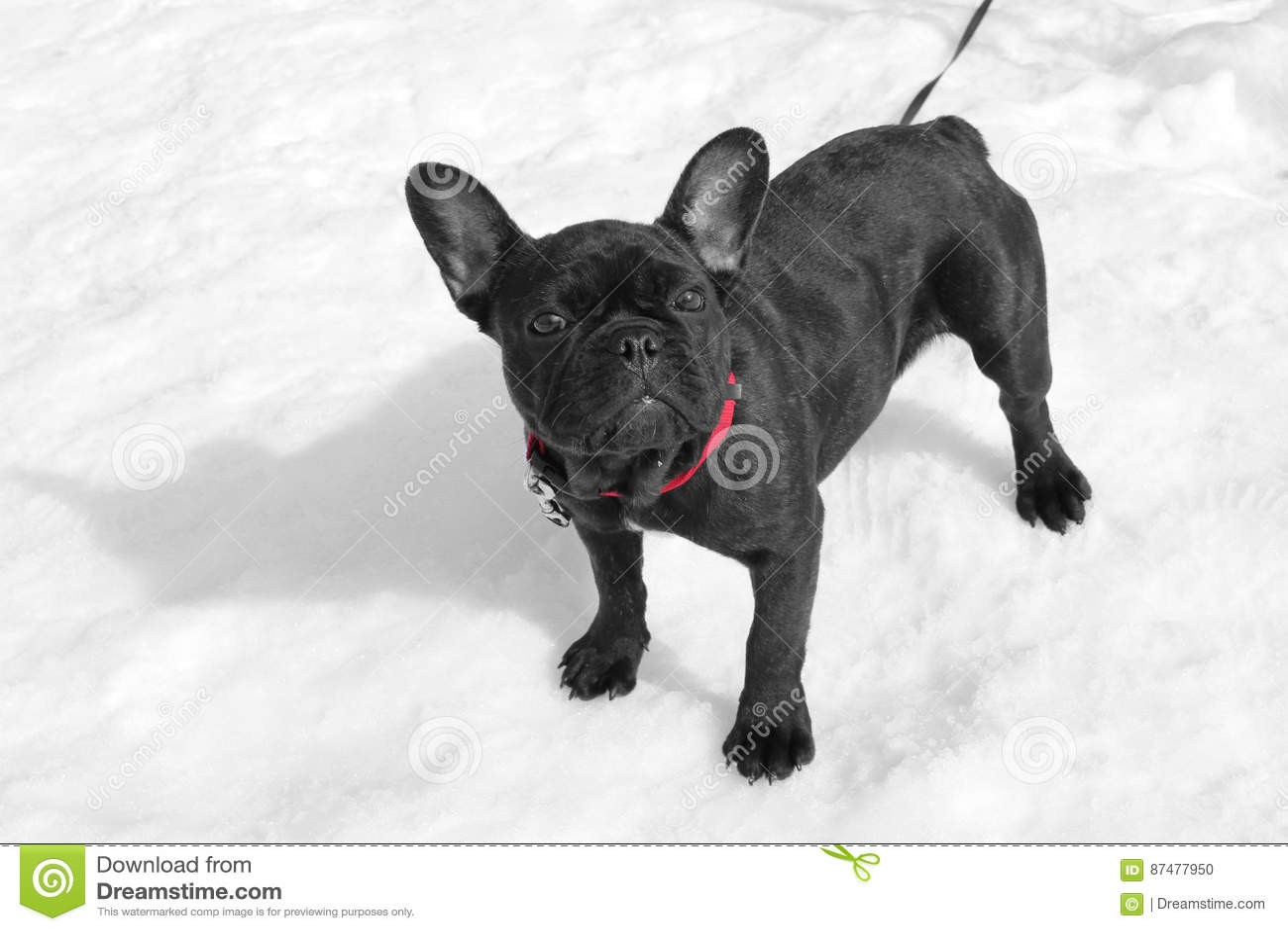 Собака на снежке