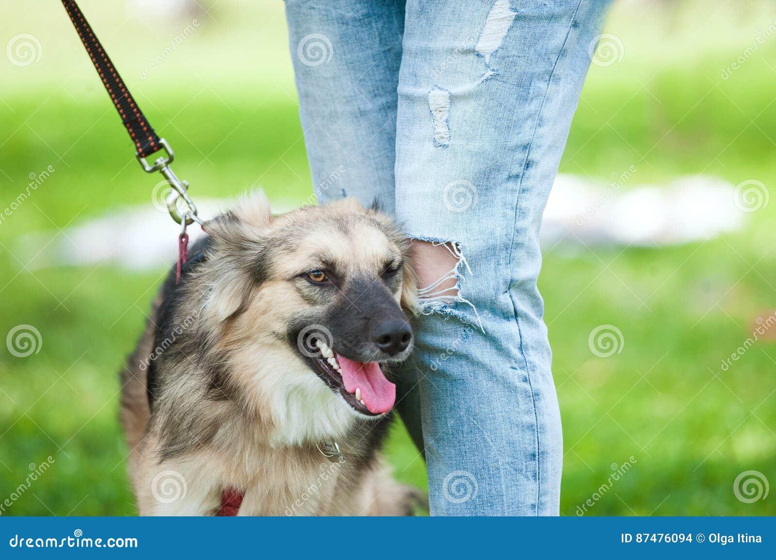 Собака около его предпринимателя на расплывчатой зеленой предпосылке