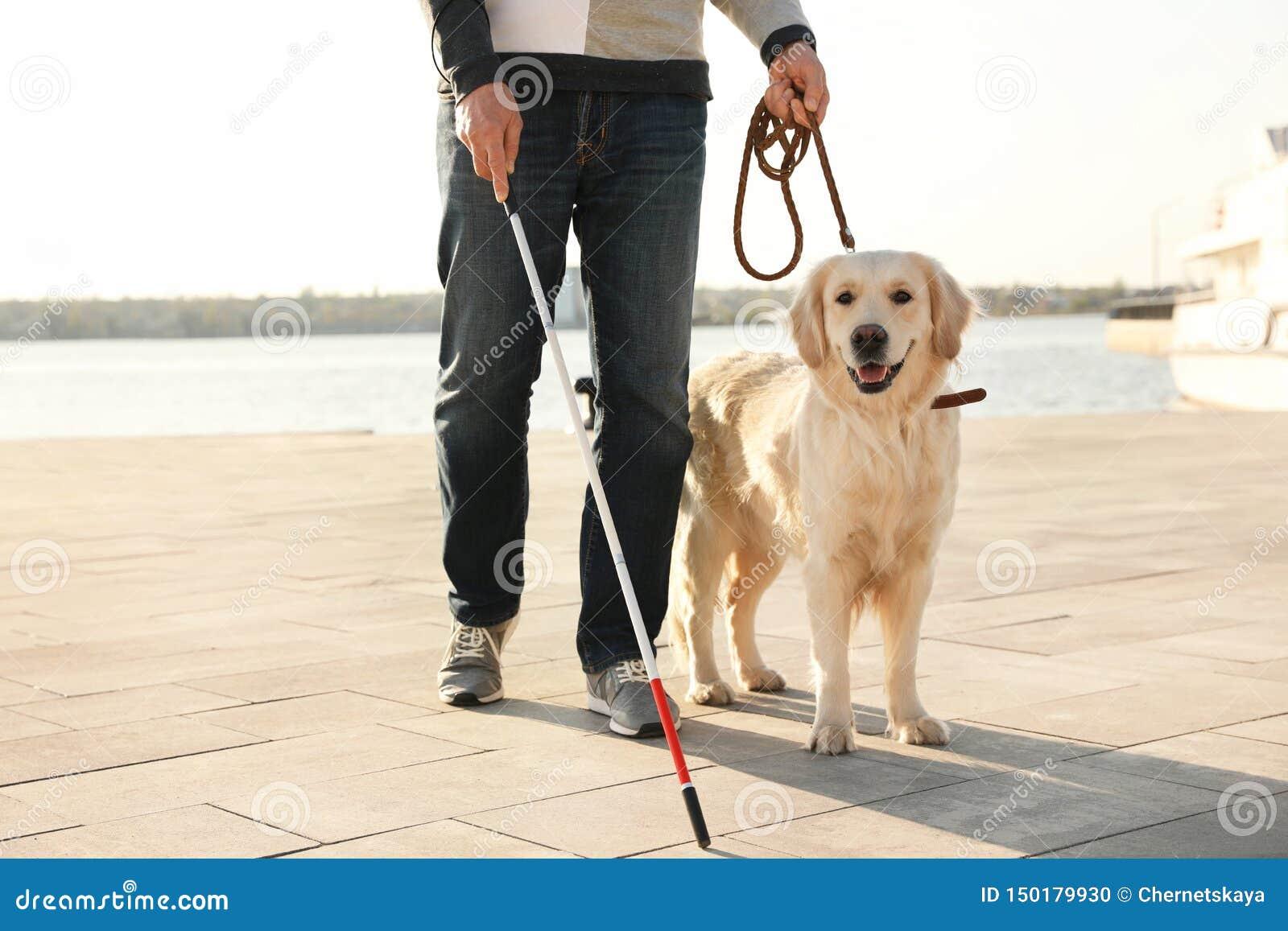Собака-поводырь помогая слепому человеку с длинный идти тросточки