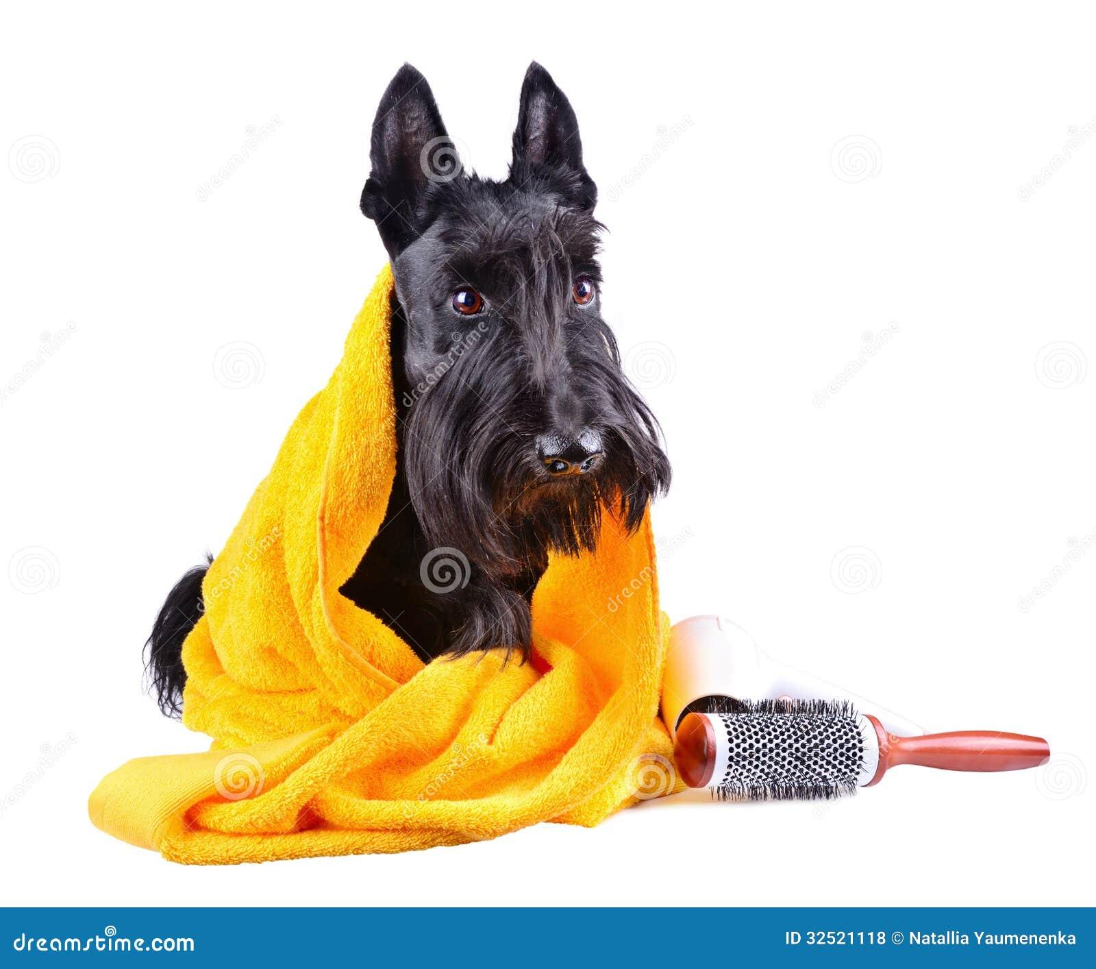 Собака после ванны