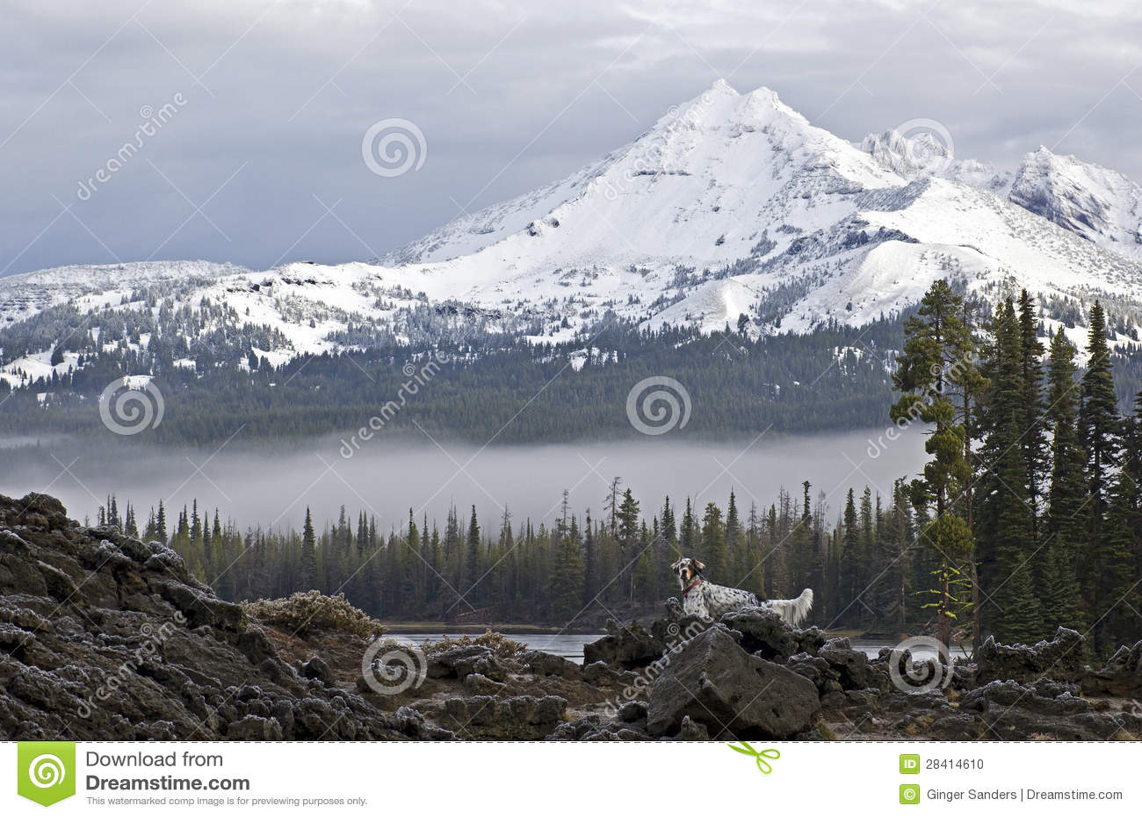Сокол в горах птица природа картинки