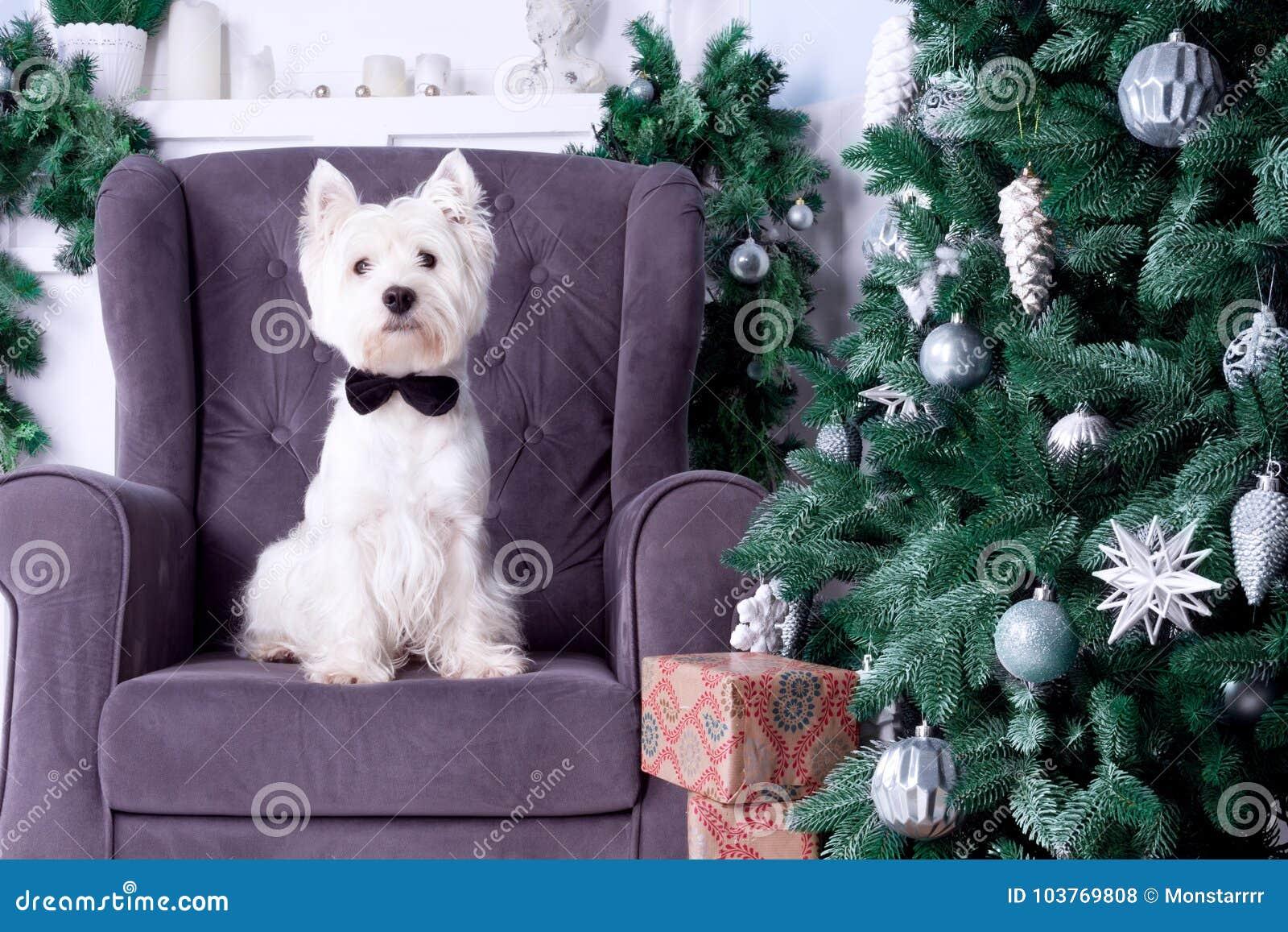 Собака рождества как символ Нового Года