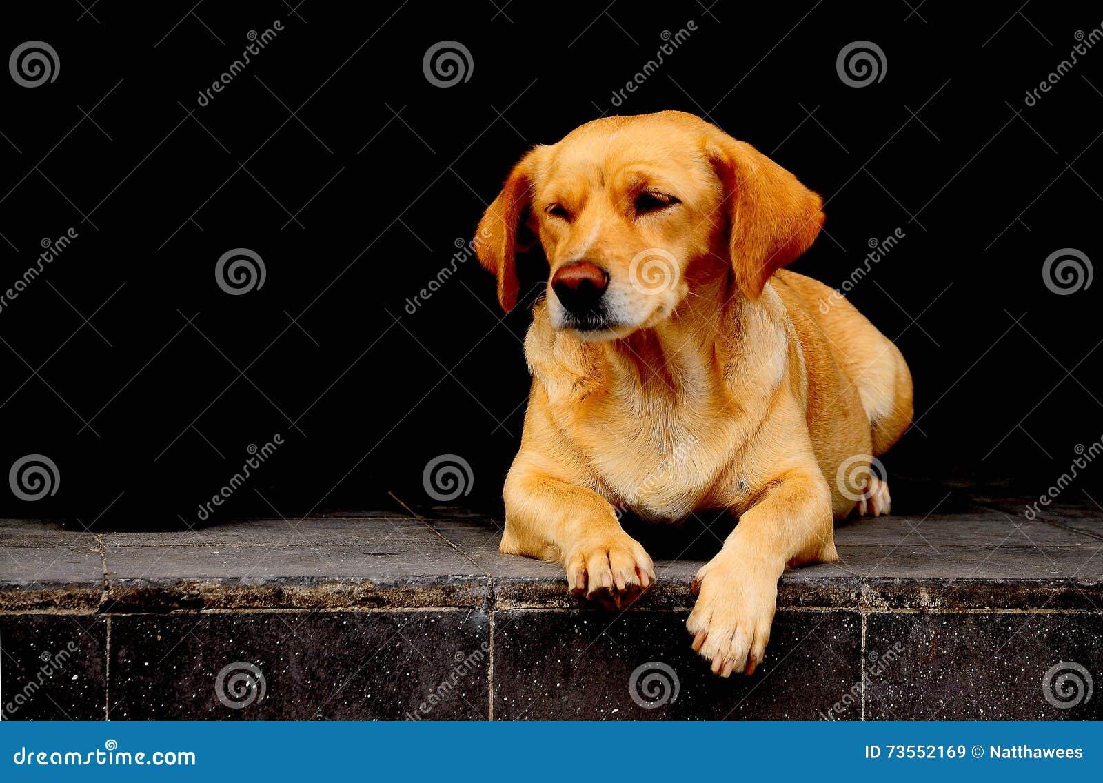 Собака сидит и ждет