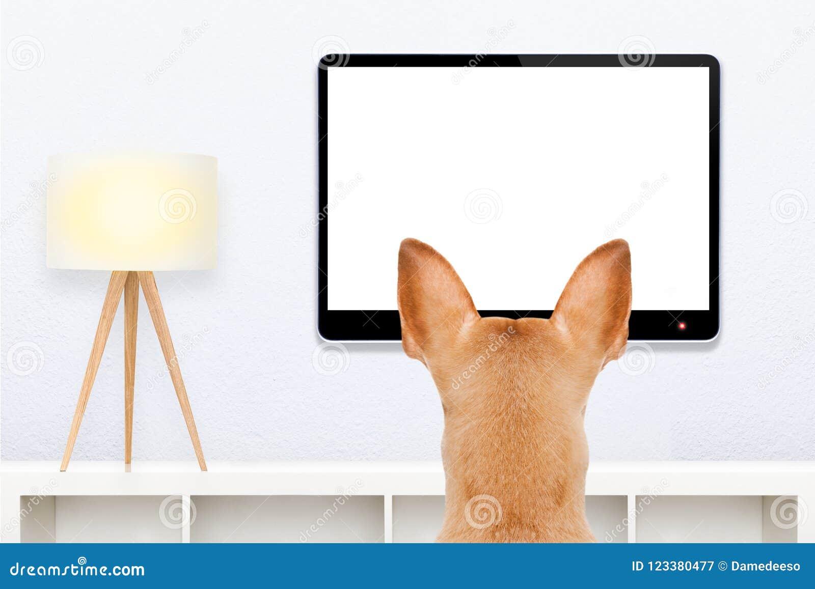 Собака смотря ТВ