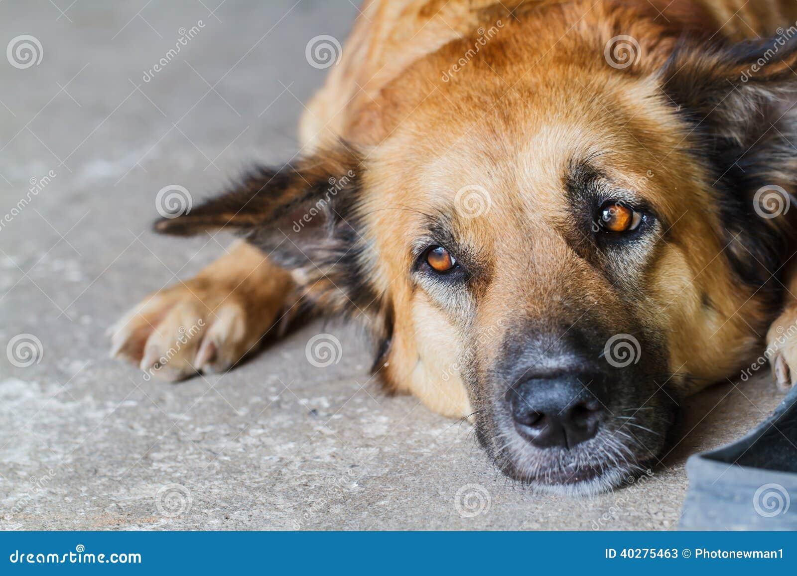 Собака совместно лежа на поле