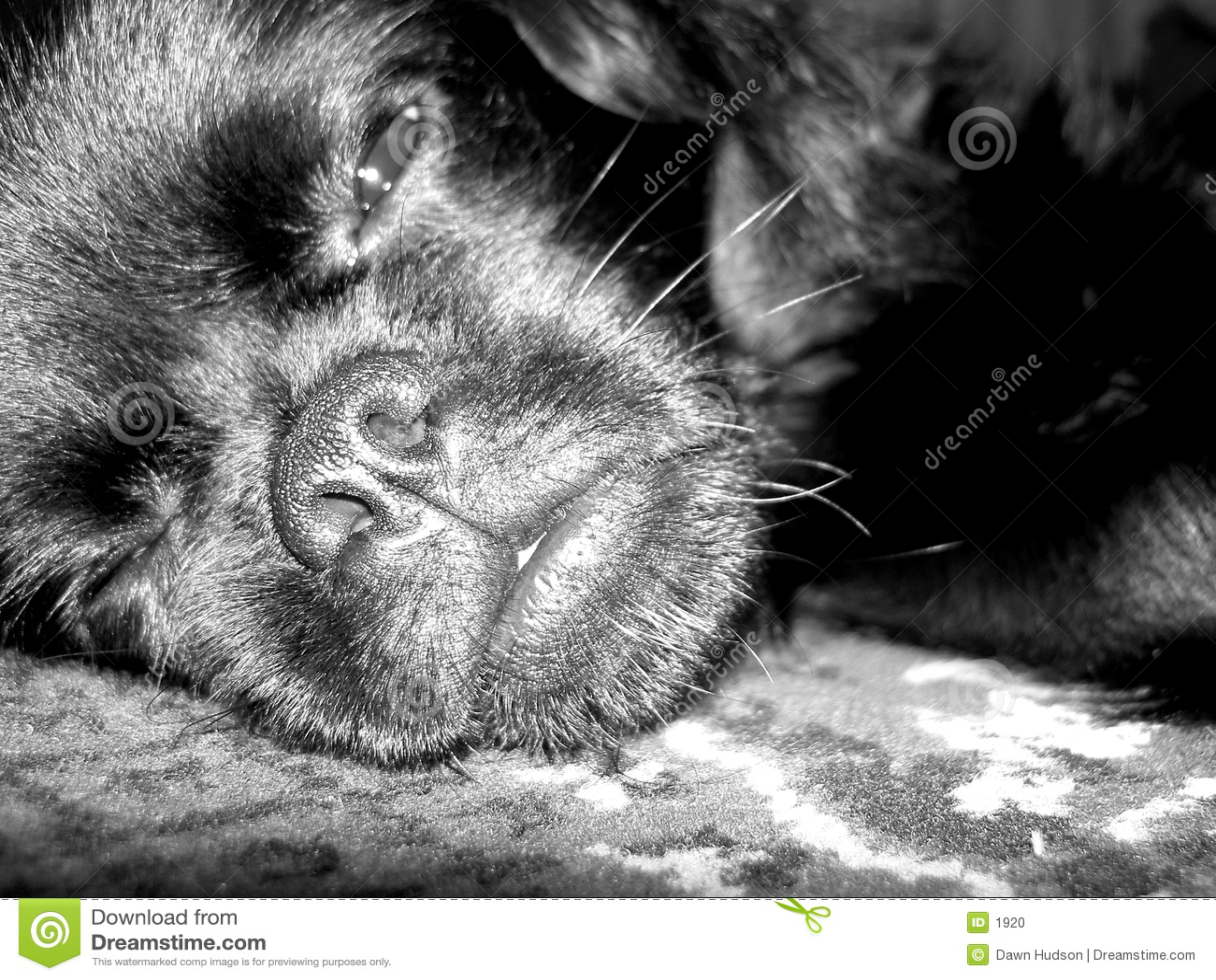 собака сонная