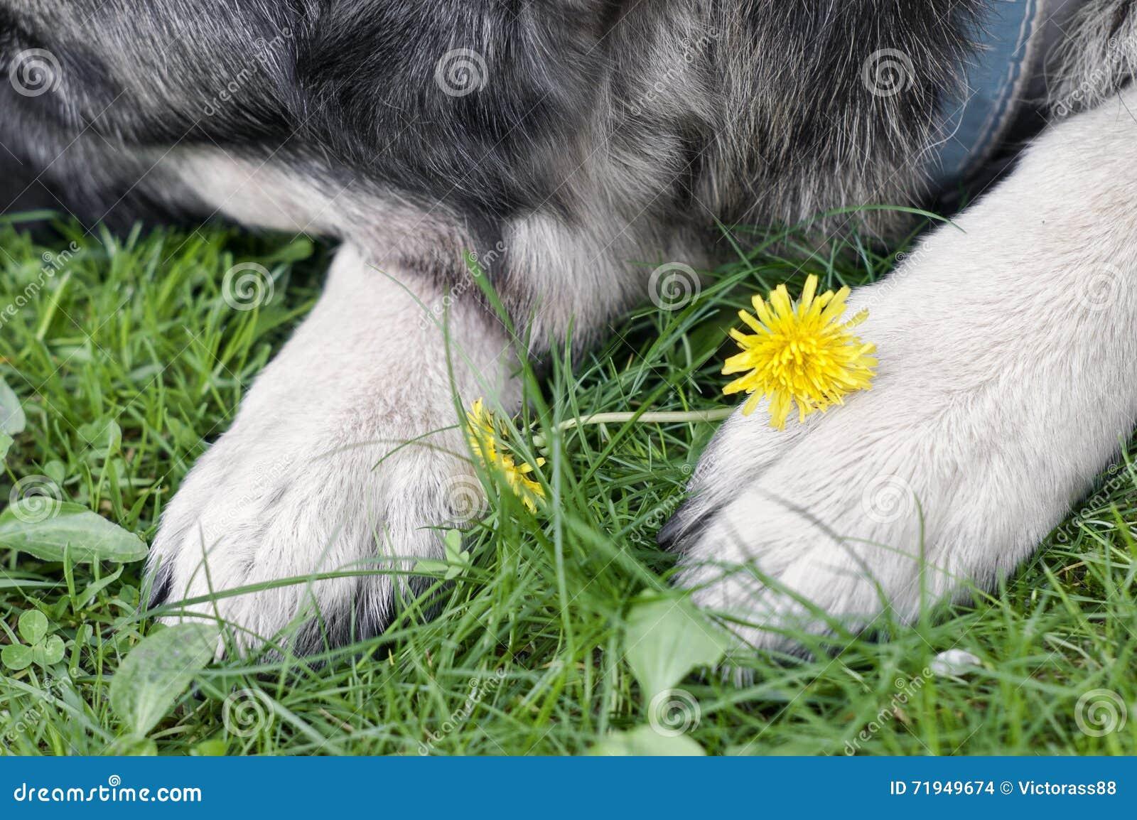 Собака спать в саде