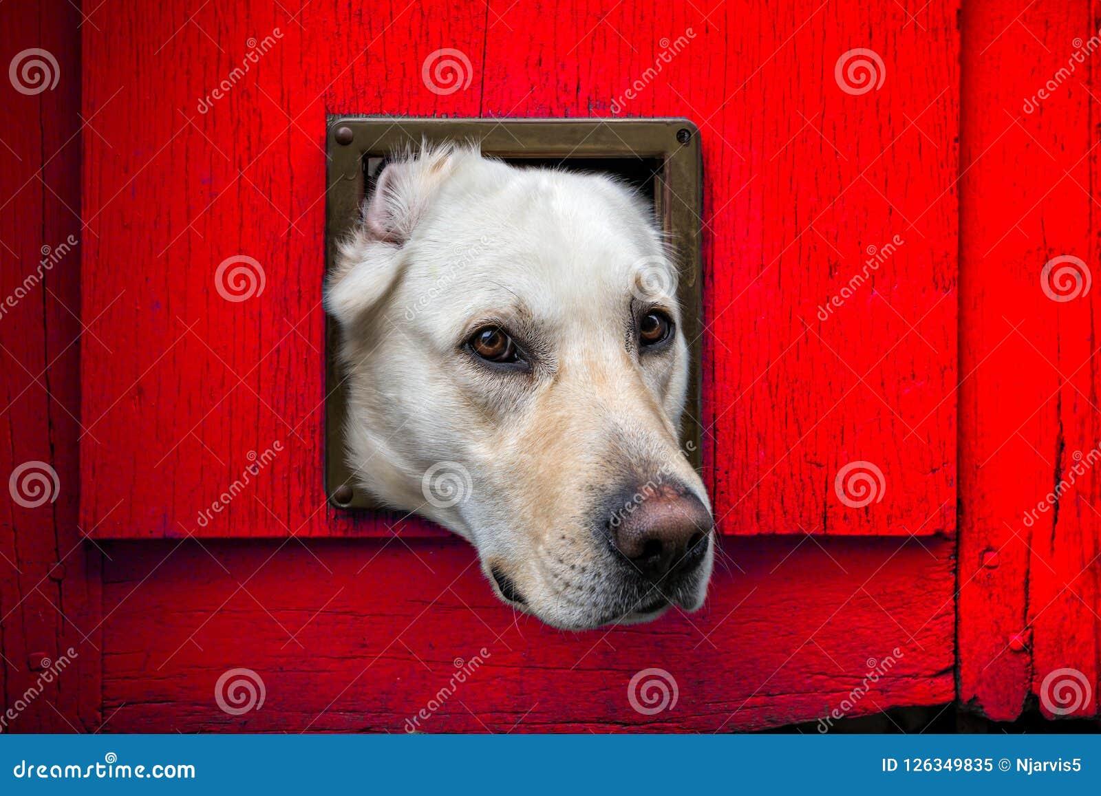 Собака с головой через щиток кота против красной деревянной двери