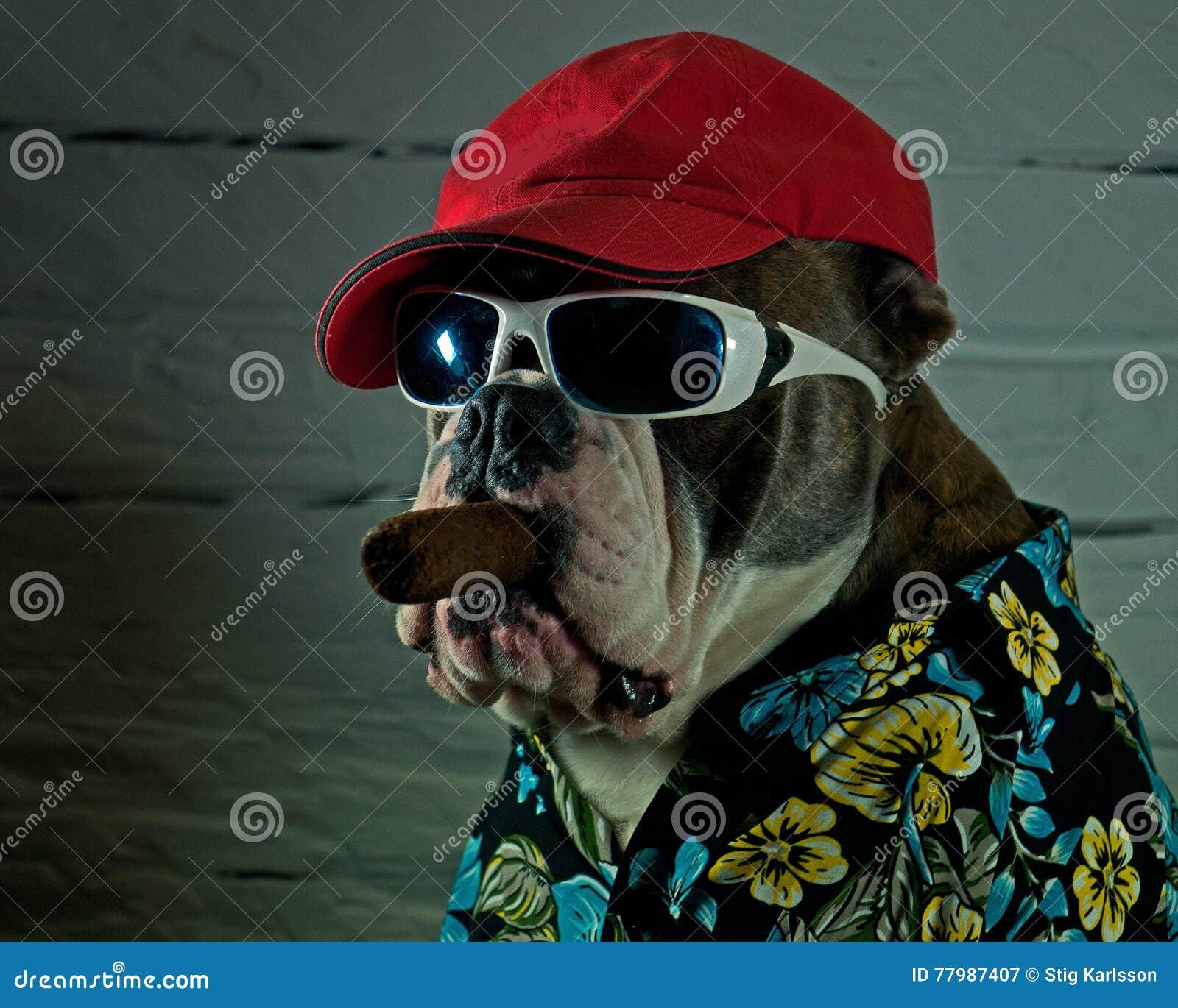 Собака с сигарой