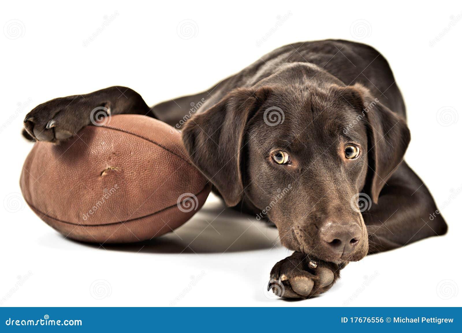 Собака с футболом