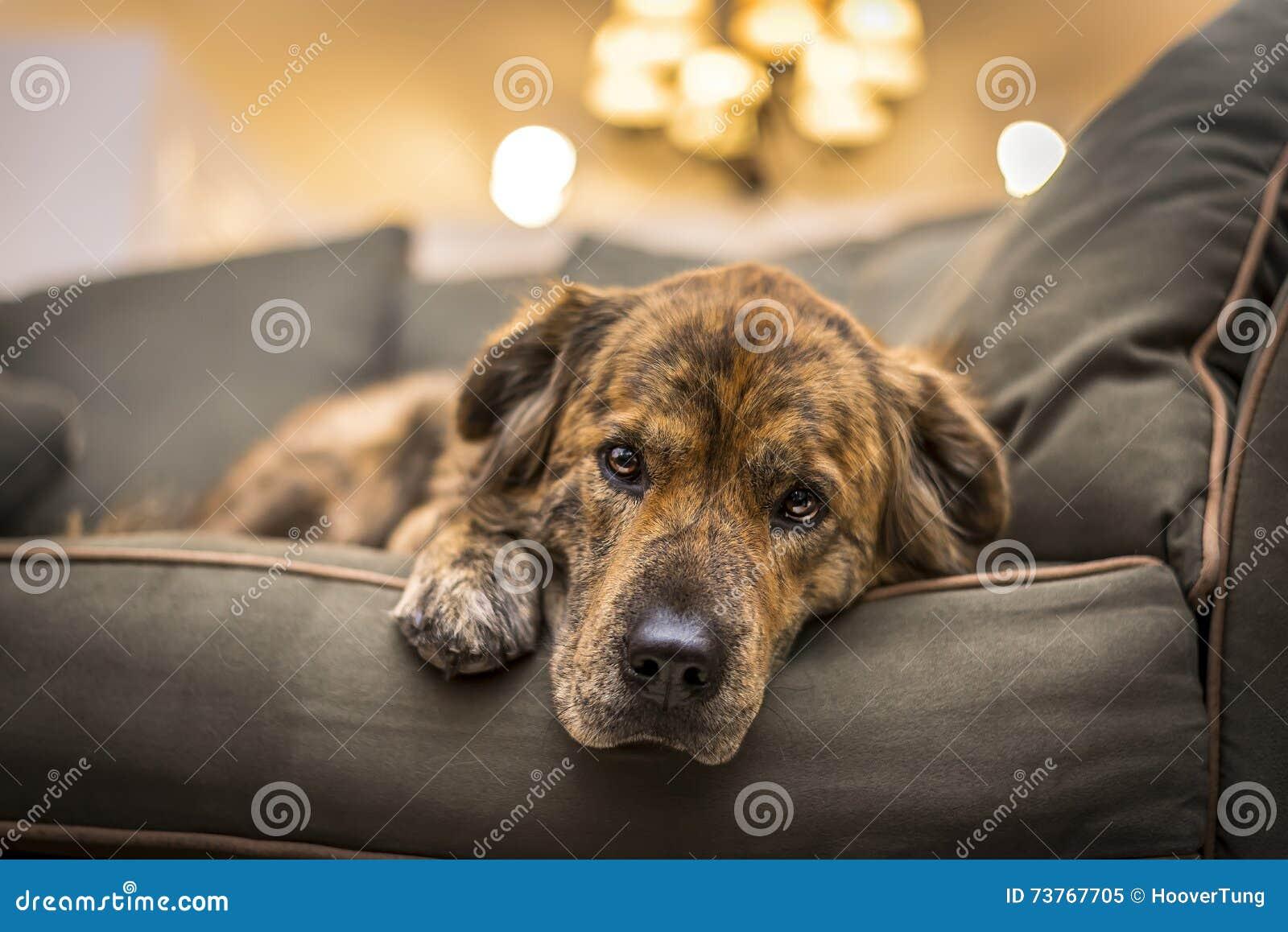 собака унылая