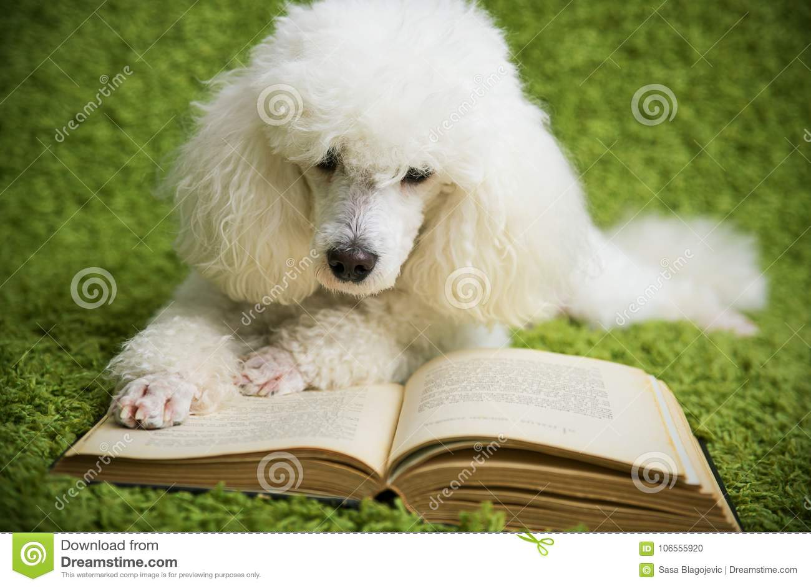 Собака читает книгу