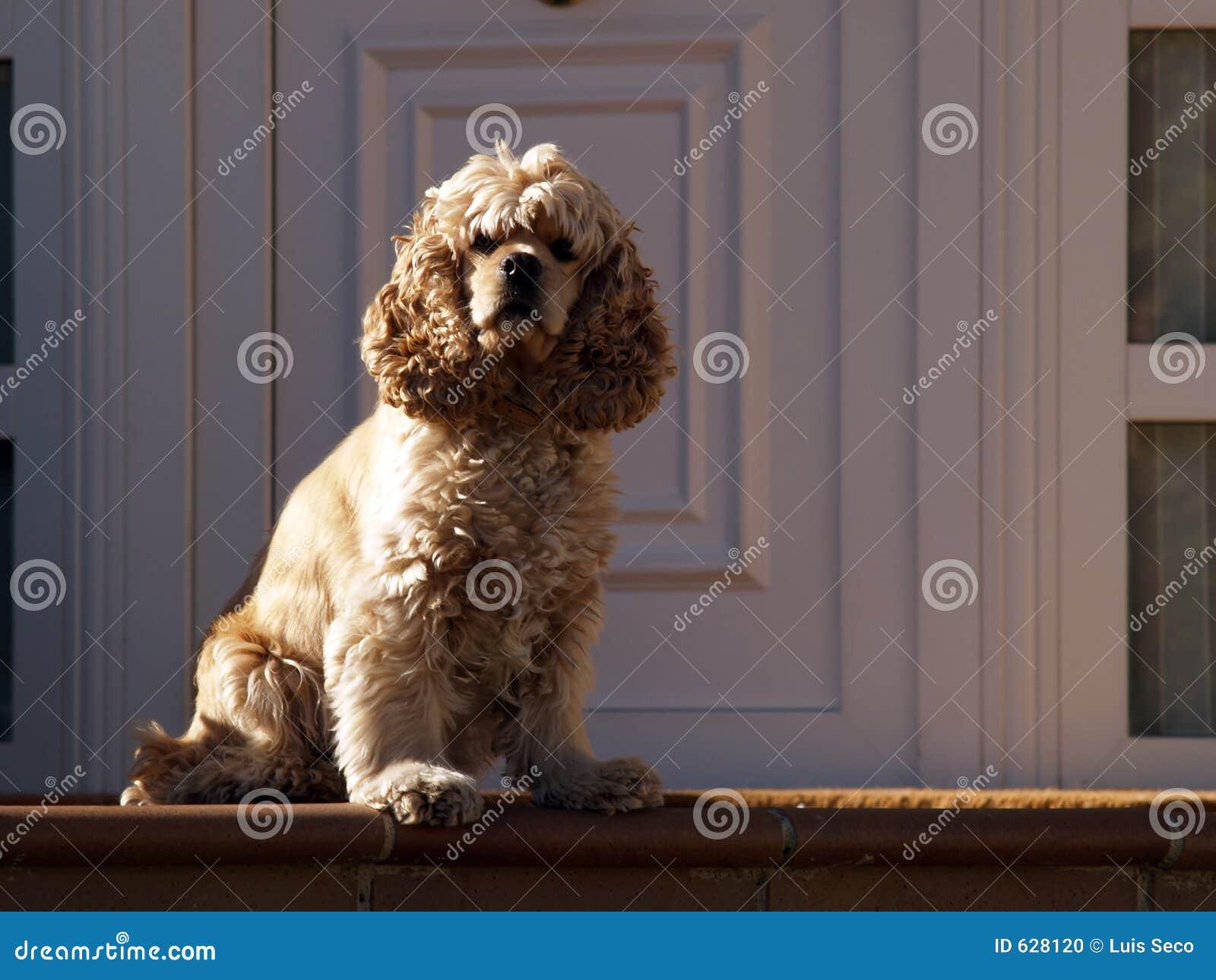 Download собака шикарная стоковое фото. изображение насчитывающей золотисто - 628120