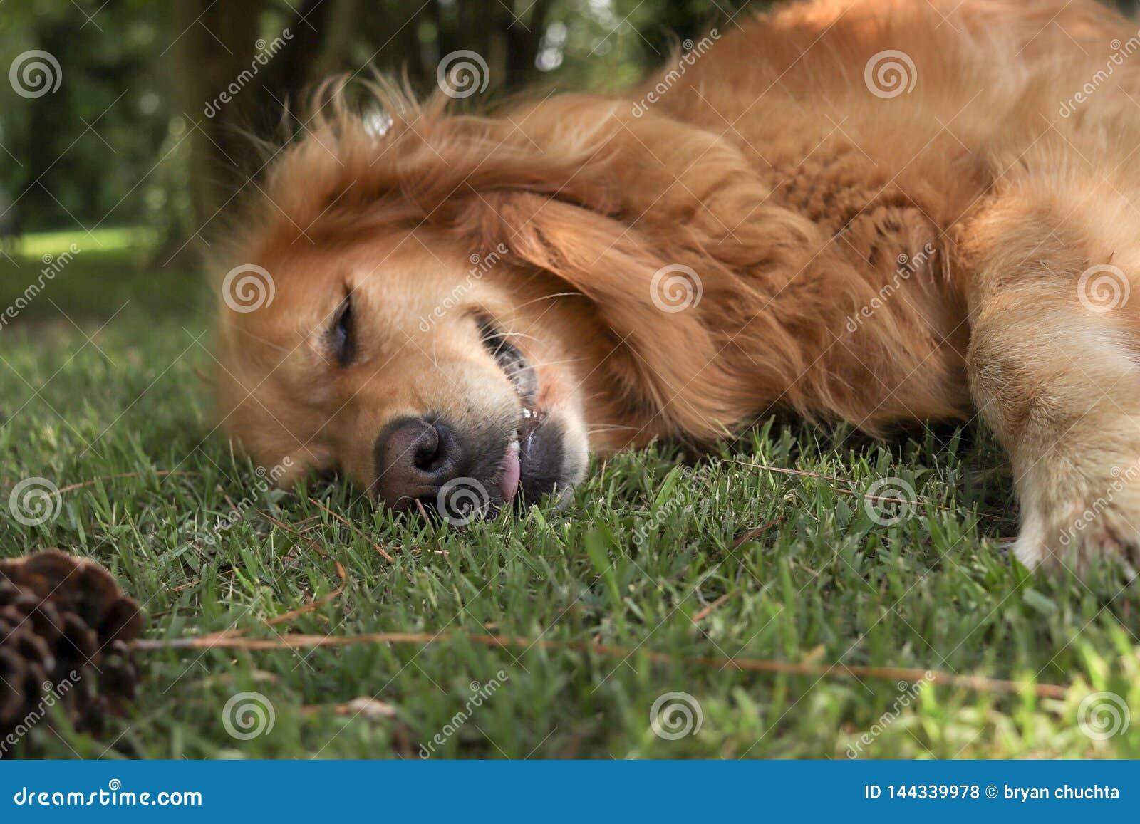 Собака щенка кладя в зеленую траву