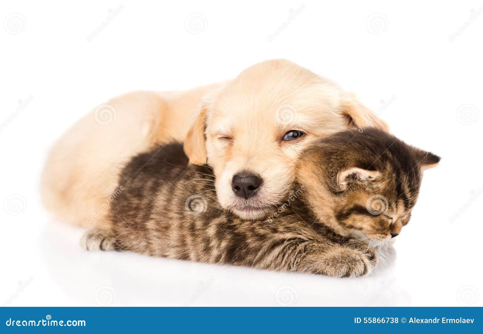 Собака щенка младенца и маленький котенок спать совместно ...