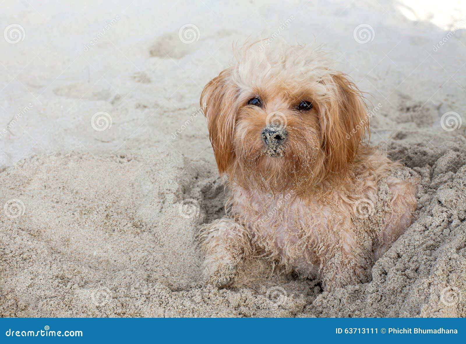 Собака щенка на пляже