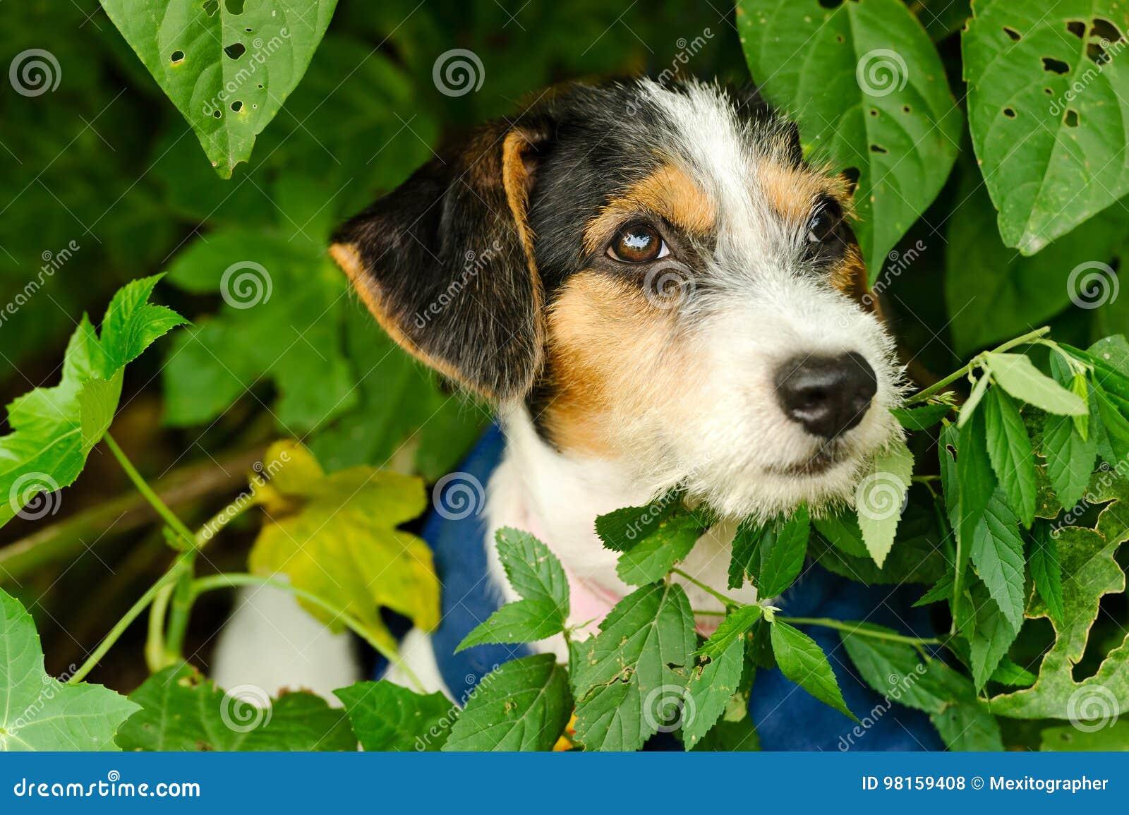 Собака щенка принимает