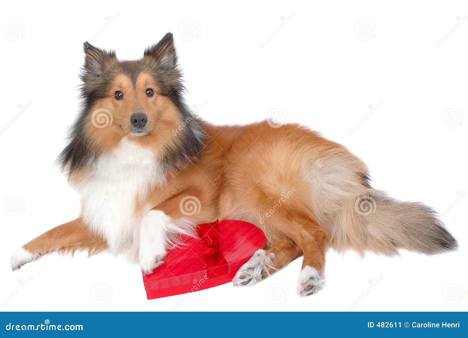 собака 8 романтичная