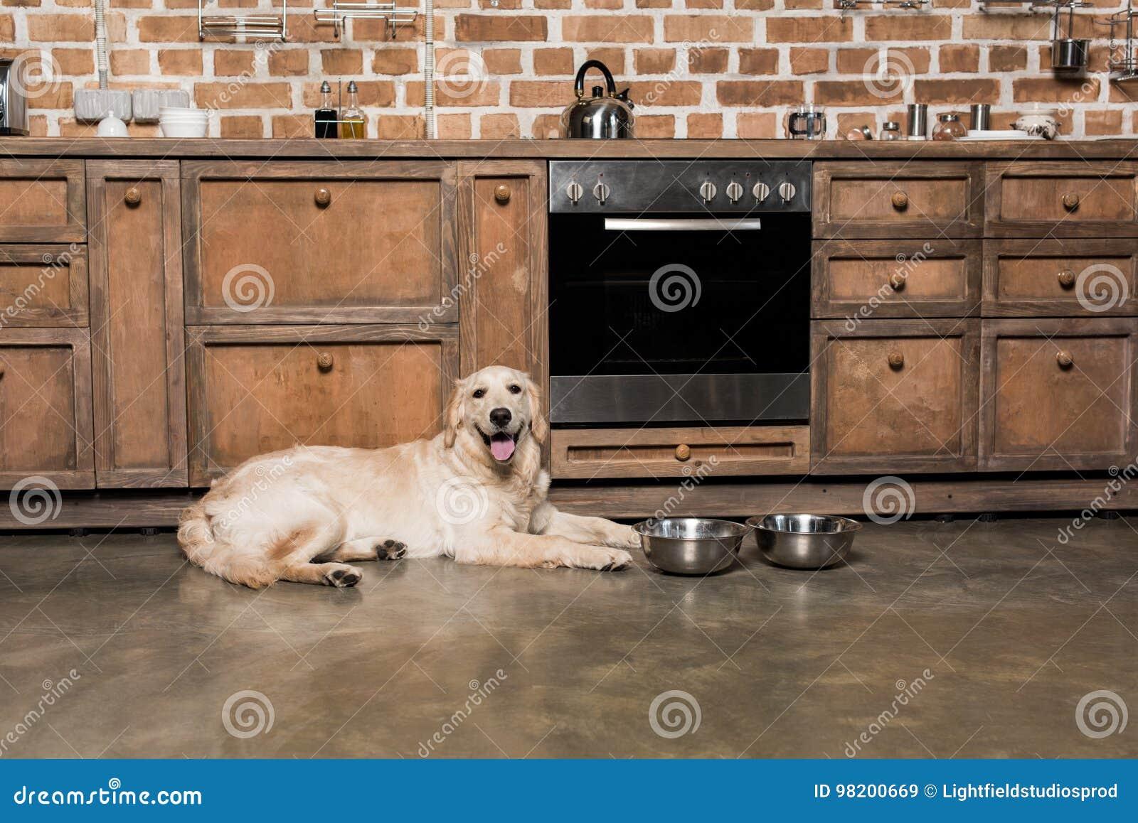 Download Собака Retriever лежа на металлических шарах в кухне Стоковое Изображение - изображение насчитывающей друг, меховой: 98200669