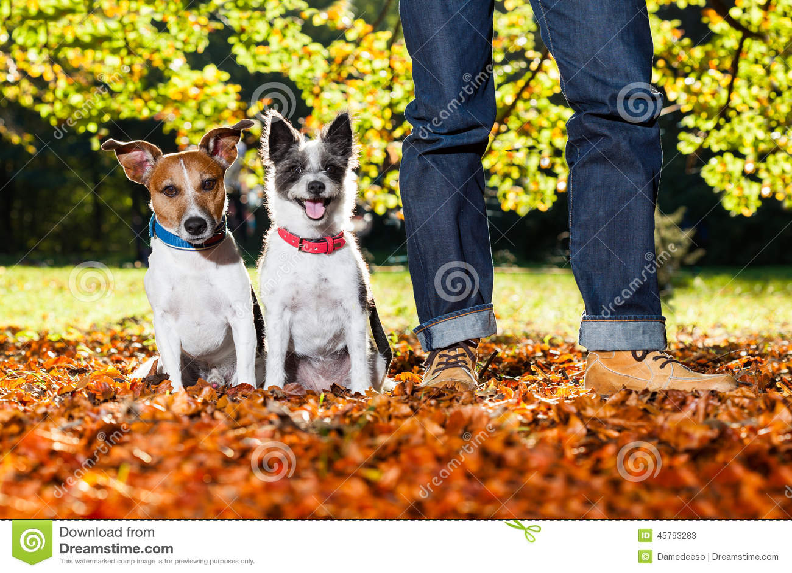 Собаки и предприниматель