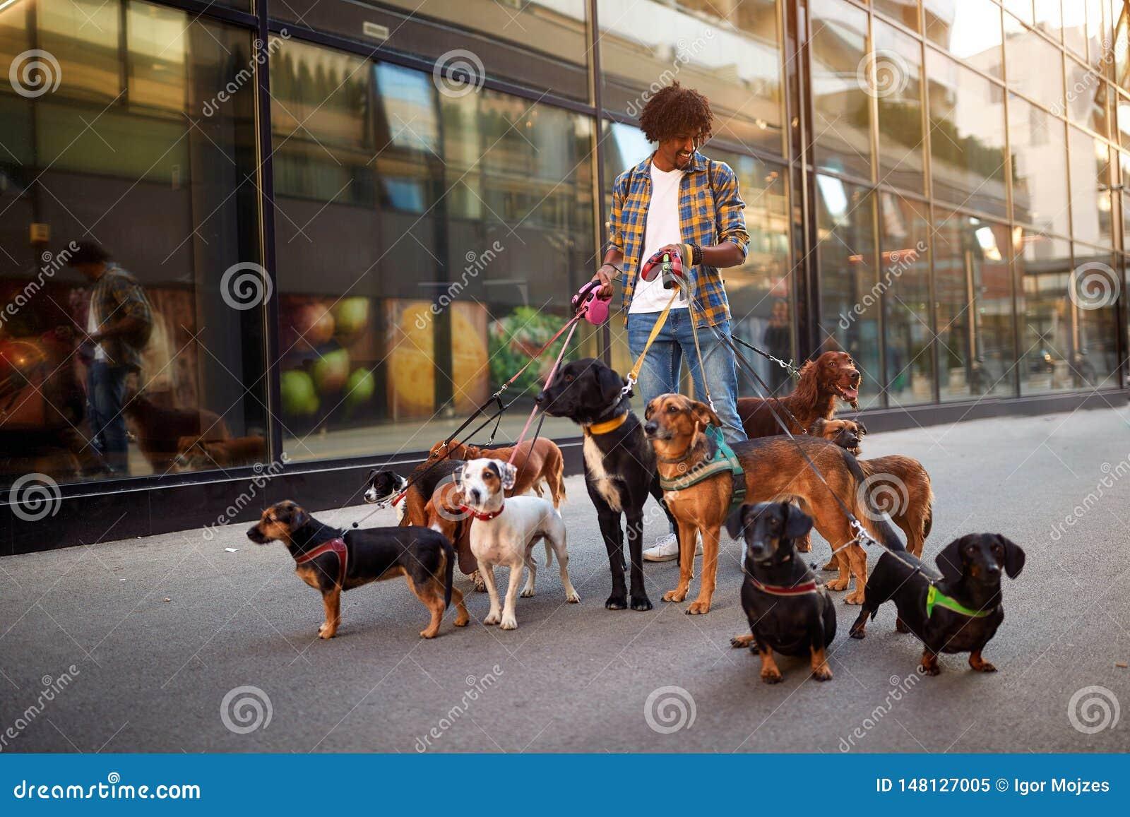 Собаки на улицах на поводке с ходоком собаки человека профессиональным