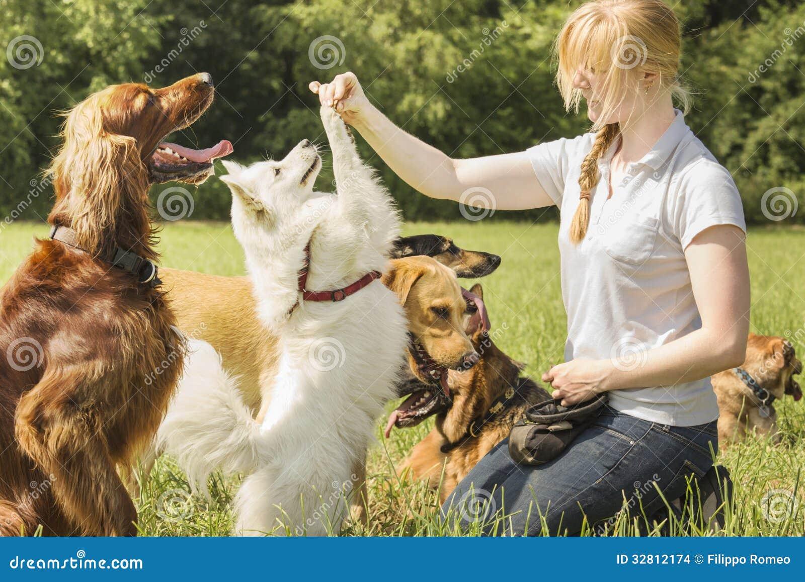 Собаки тренера собаки уча