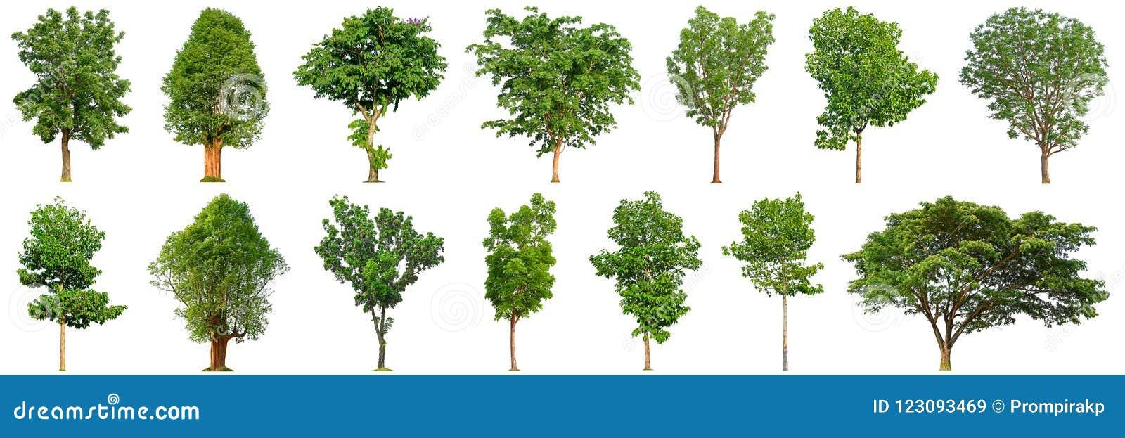 Собрание дерева изолировало на белых деревьях предпосылки 14
