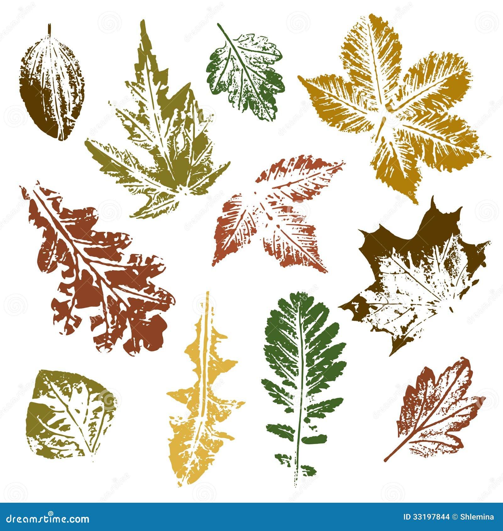 Белый рисунок на листьях