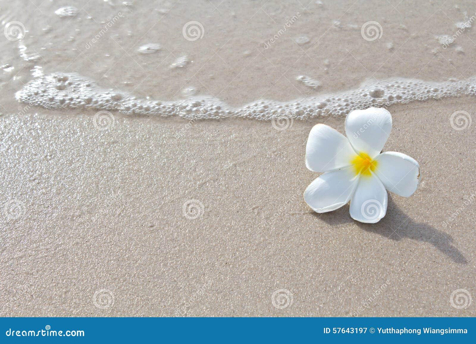 собрание пляжа цветет белизна природы