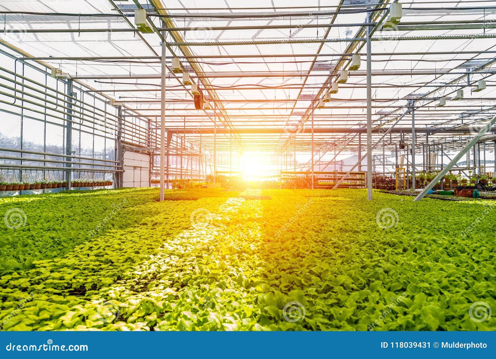 Современный hydroponic парник с системой контроля климата для культивирования цветков и орнаментальных заводов для садовничать
