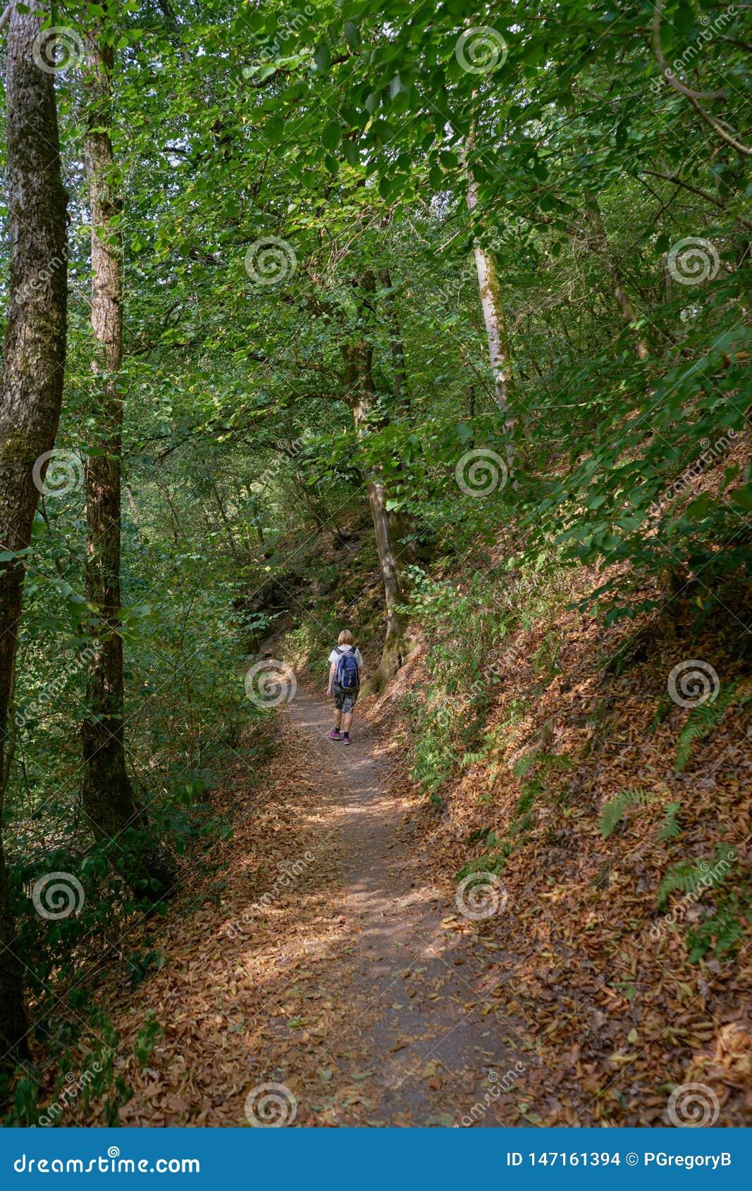 Солитарный женский Hiker путешествует через прекрасный лес