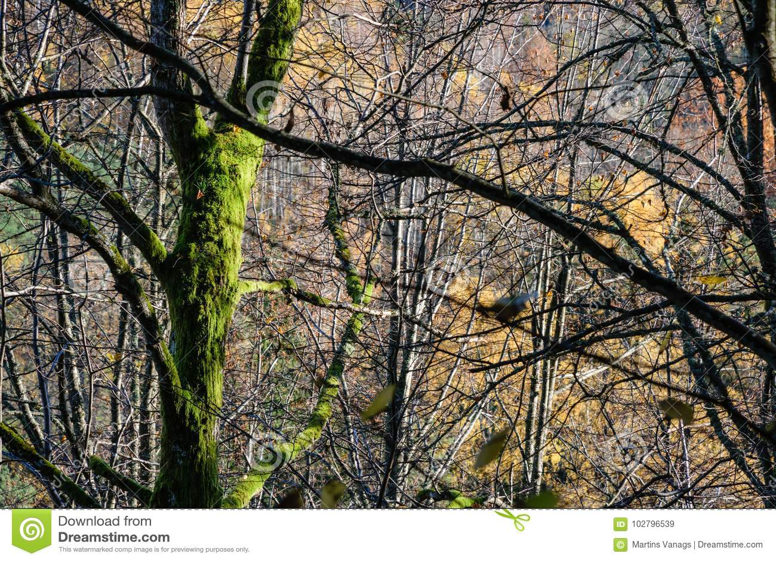 солнечное утро в древесинах лес с стволами дерева