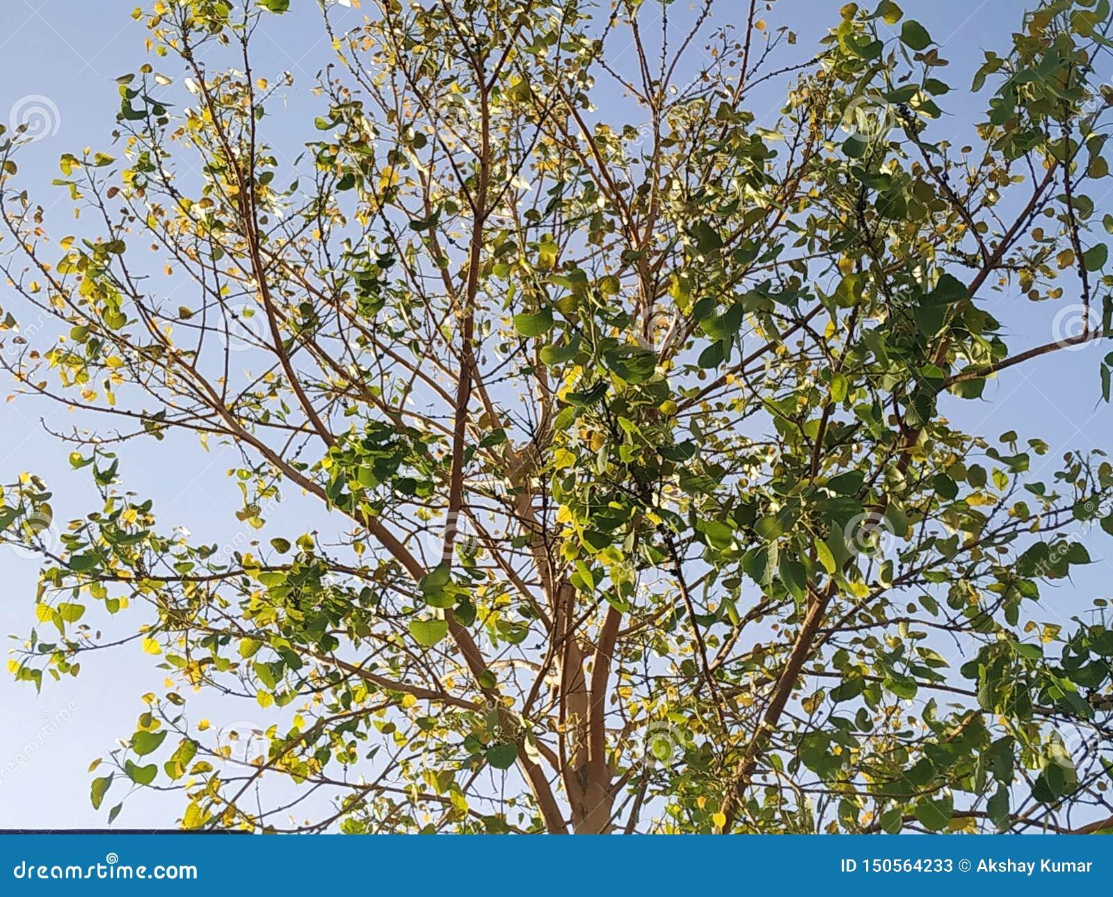 Солнечность дерева поглощая