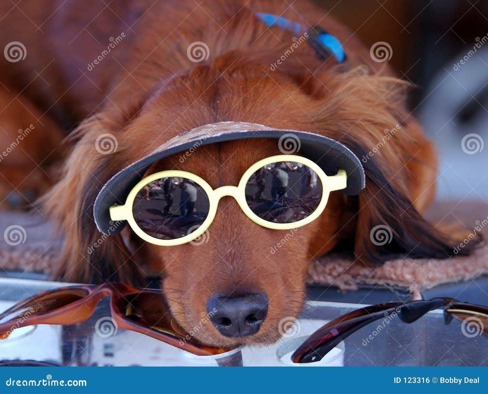 солнечные очки щенка собаки