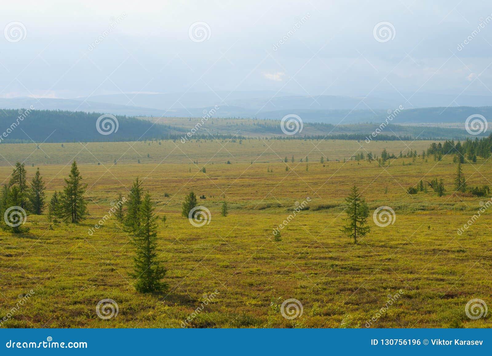 Солнечный день в августе в тундре Yamal Полярная область, Россия