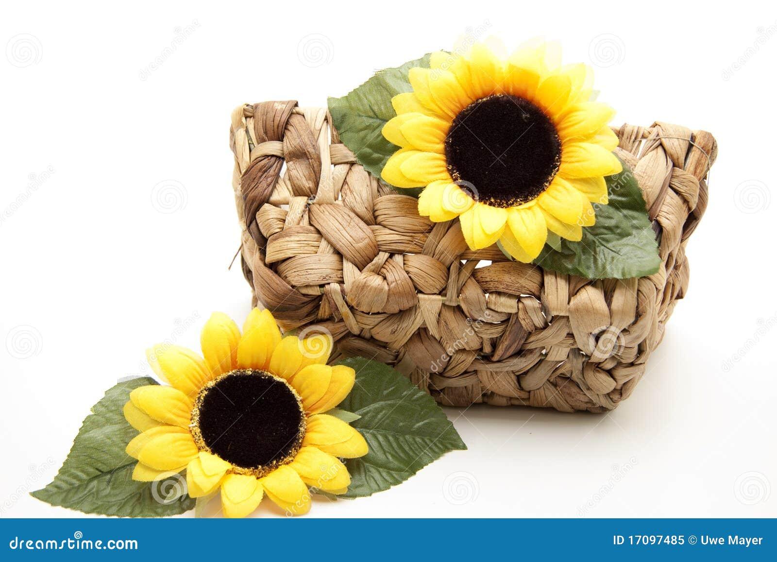 солнцецвет цветения