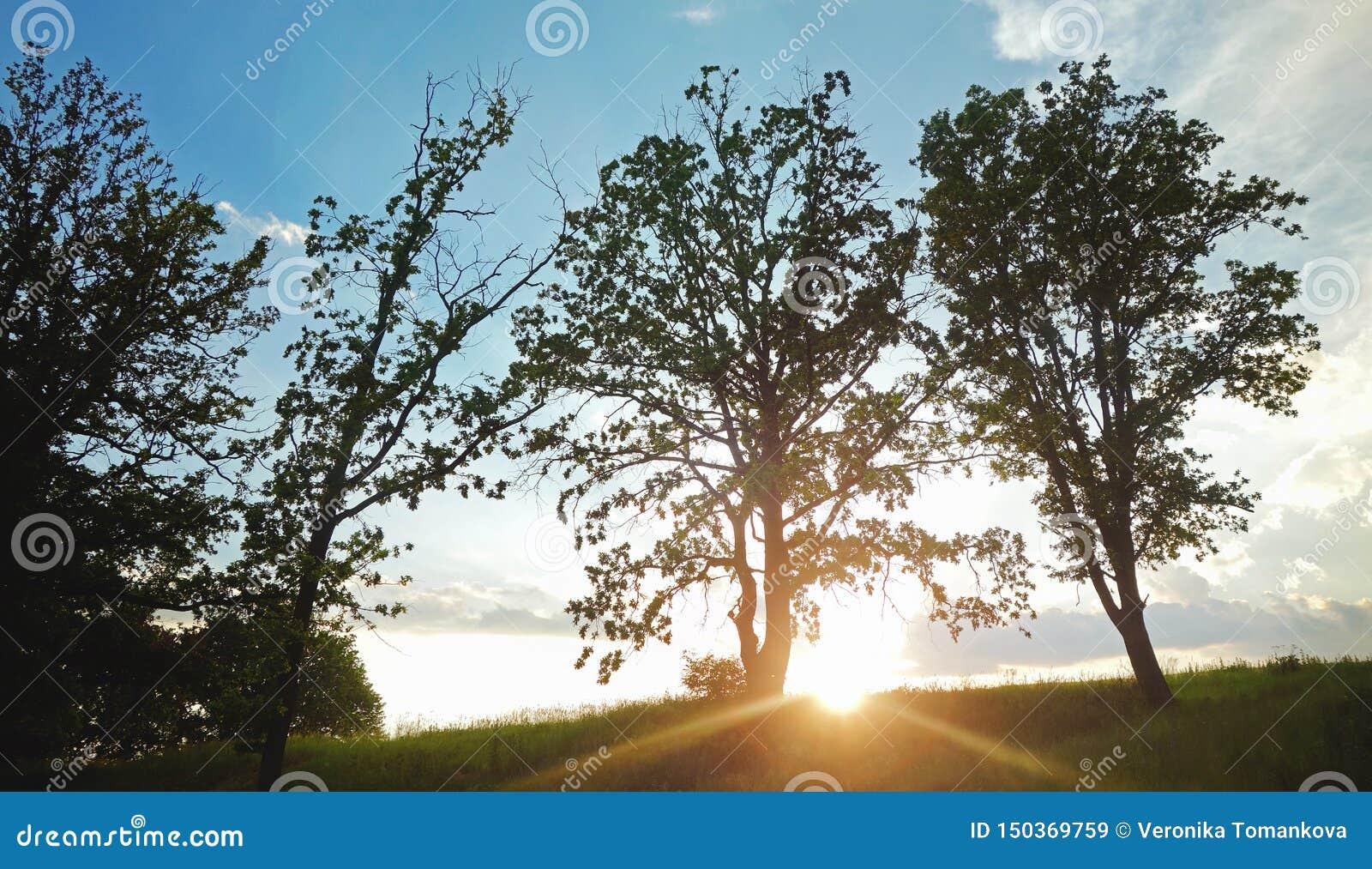 Солнце устанавливая в сельскую местность