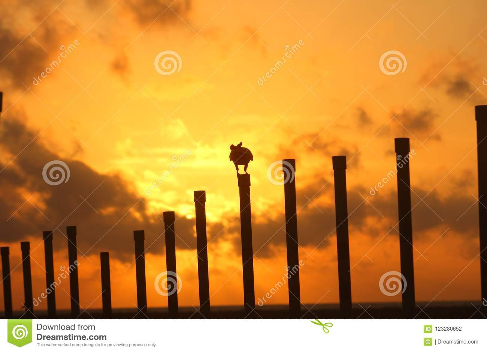 Солнце установило с вороной джунглей, Кнопперс-стороной, Шри-Ланка,