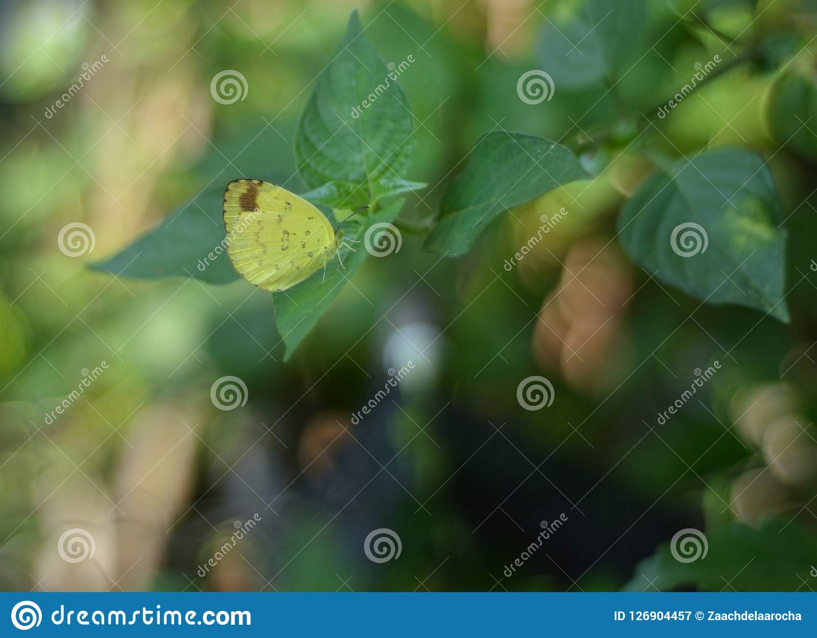 Сонная оранжевая бабочка на зеленых лист