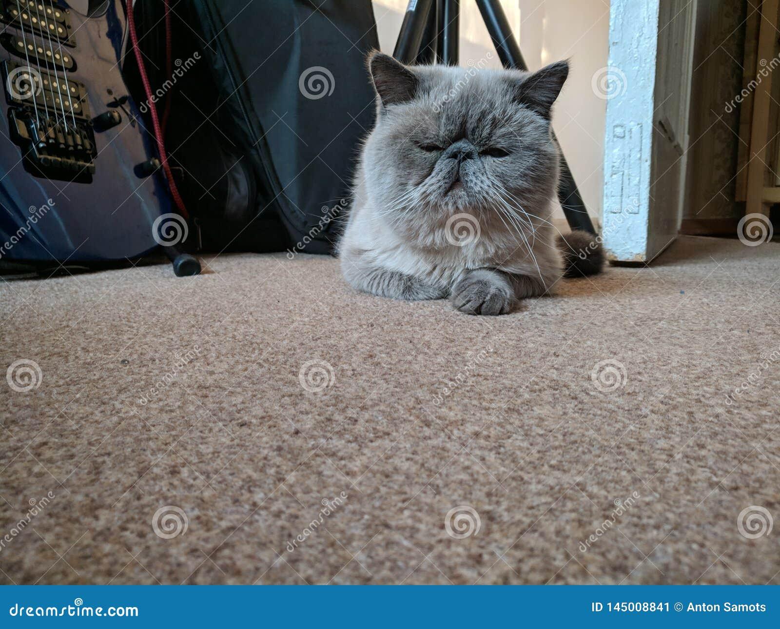 Сонный кот