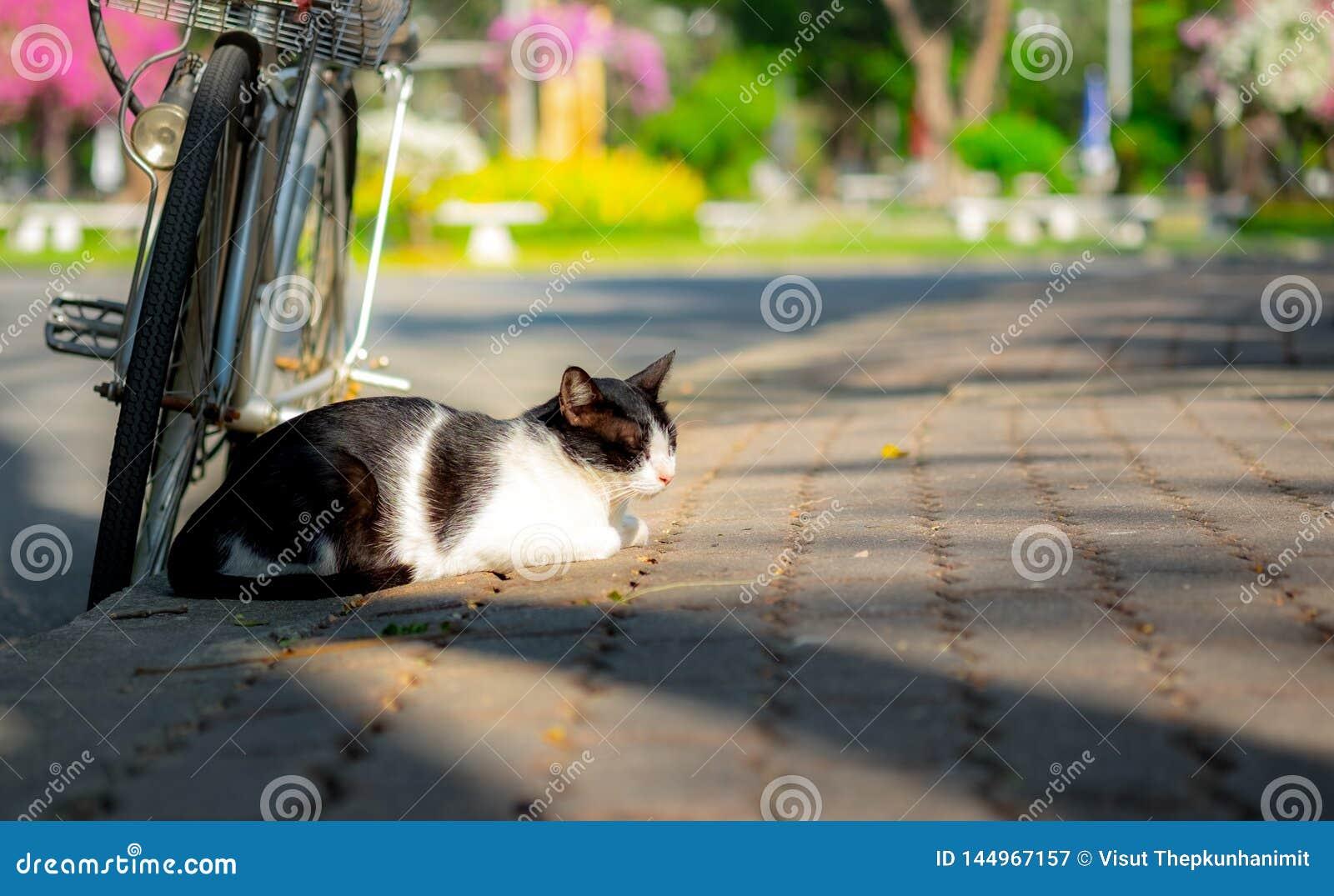 Сон кота с парком велосипеда публично
