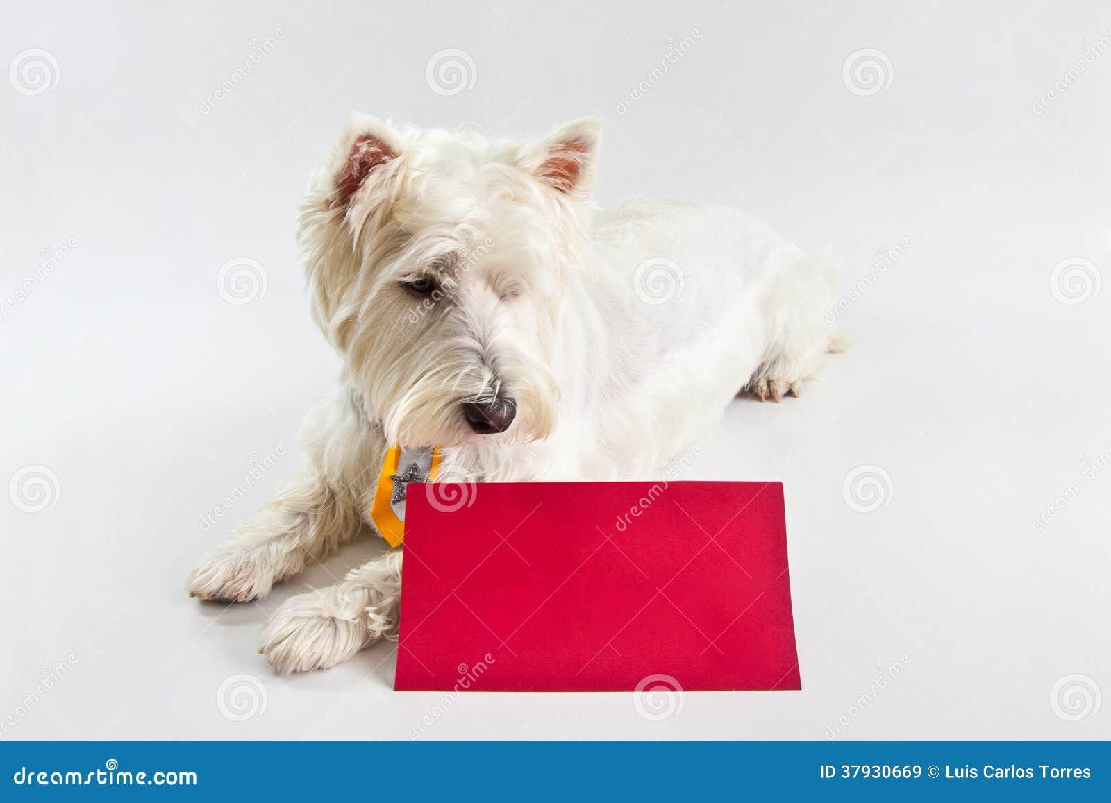 Сообщение красного цвета Westie