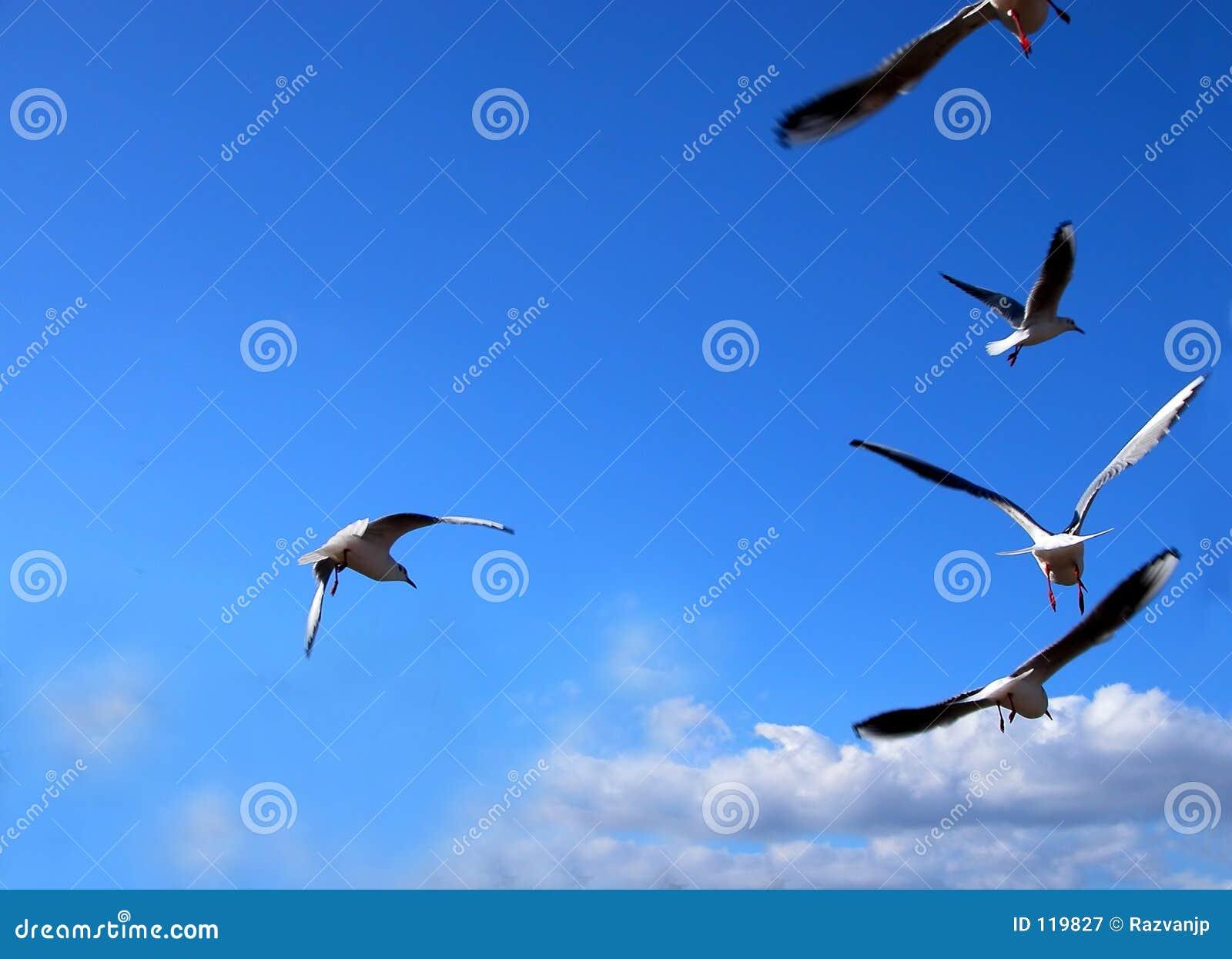 сообщение летания
