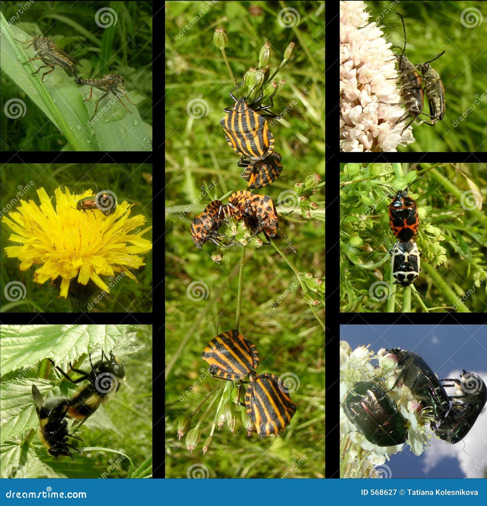 сопрягать насекомых поведения