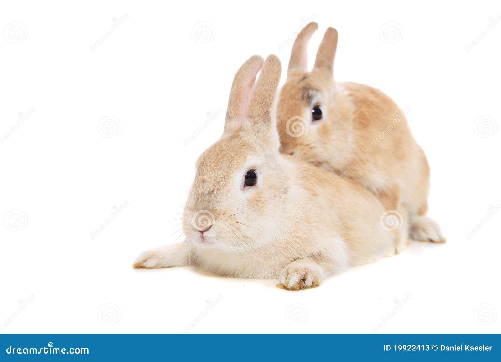 Джейсом пенис кролика закончил исповедь