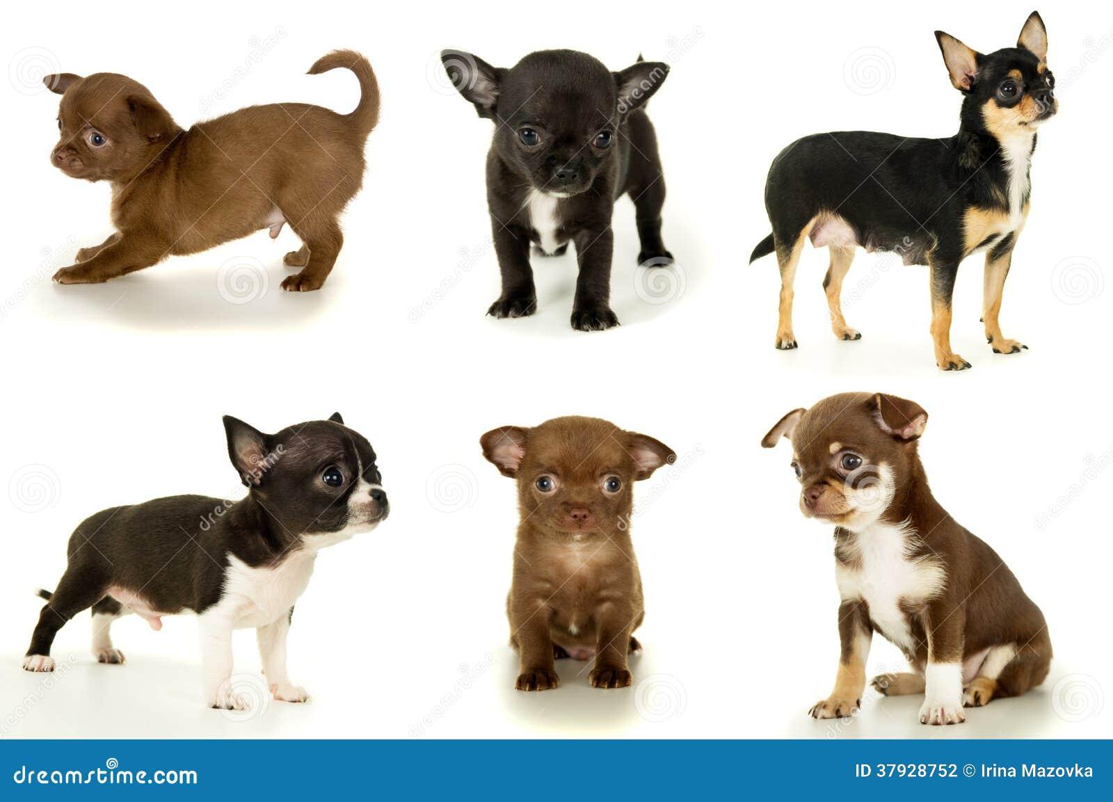Сортированные малые щенята