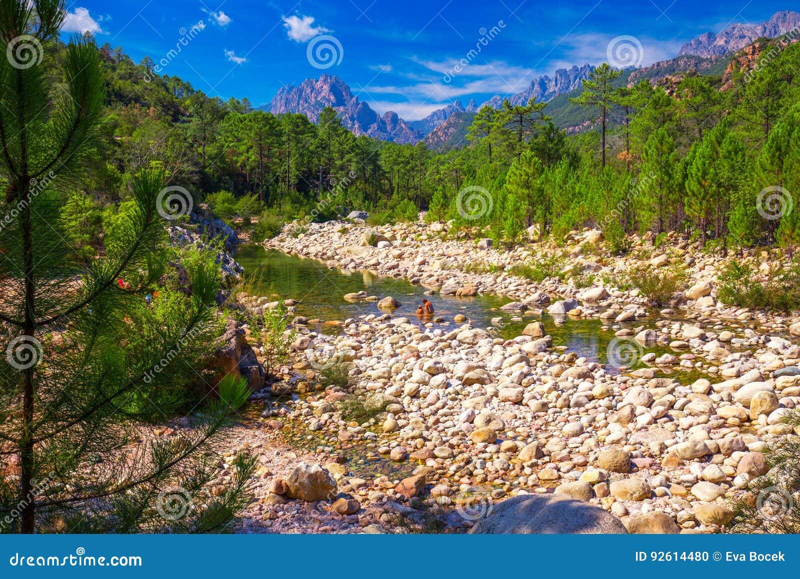 Сосны в горах Col de Bavella около Zonza, острова Корсики, Франции, Европы