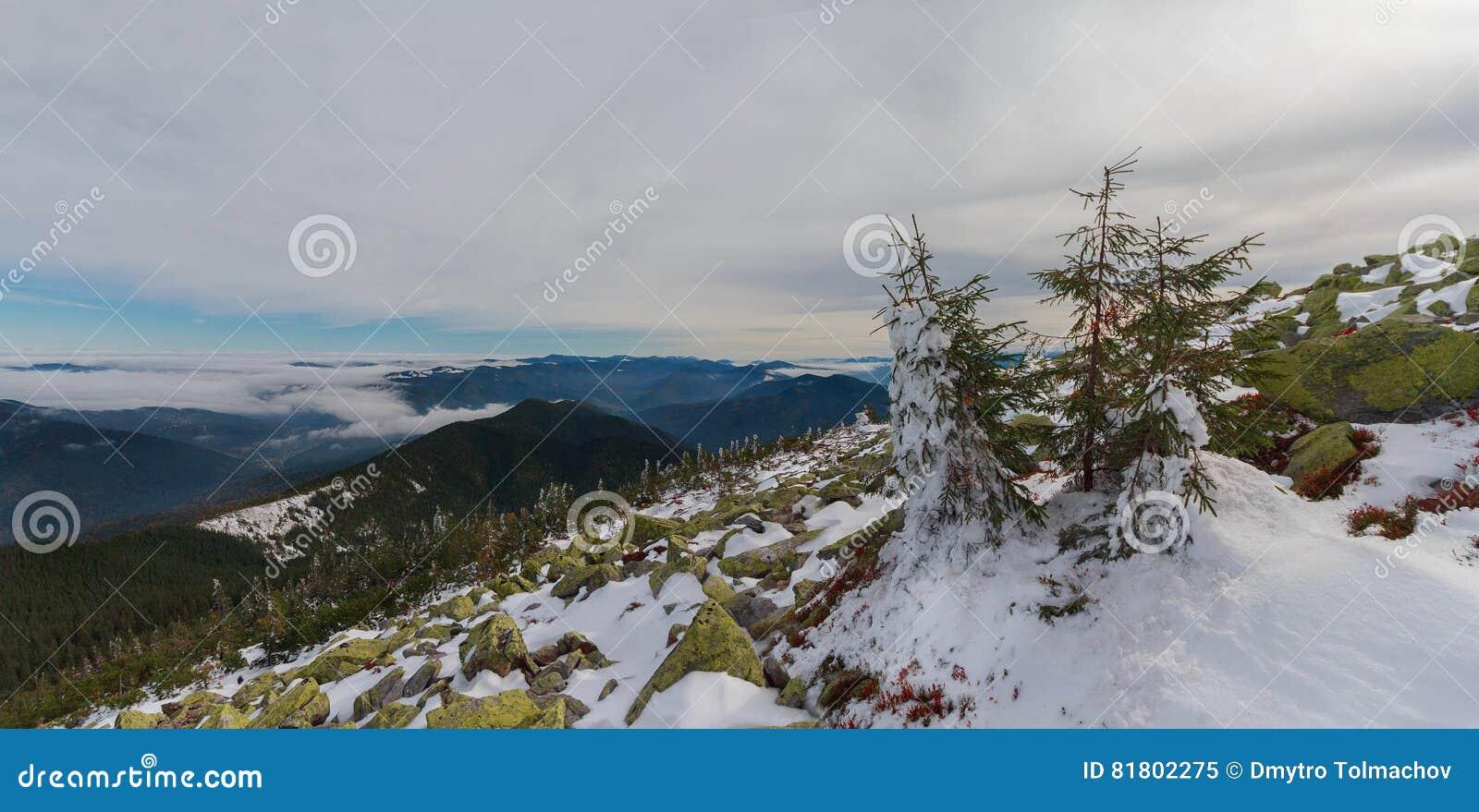 Сосны и gorgan покрытые с снегом вверху гора