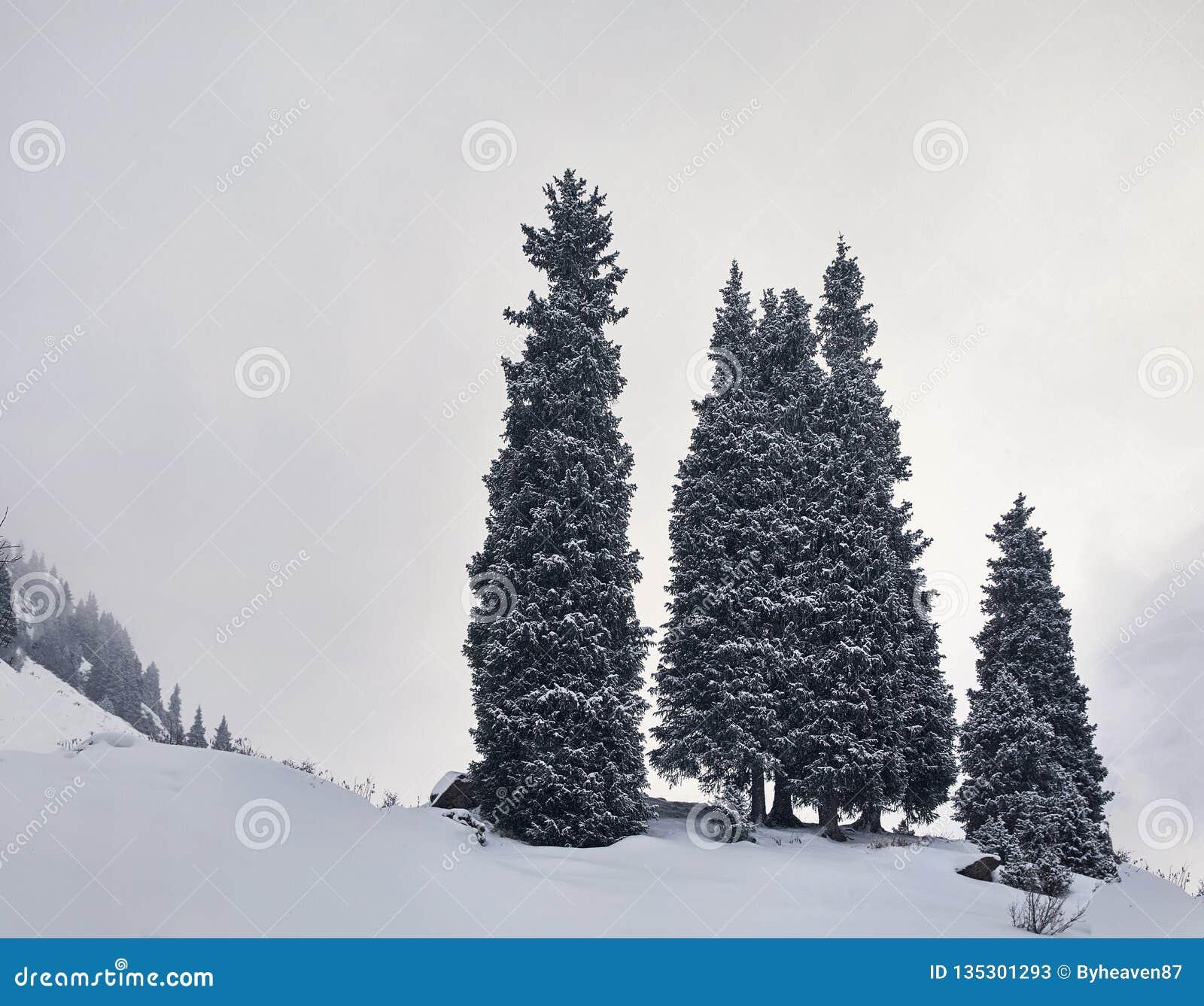 Сосны на снежных горах