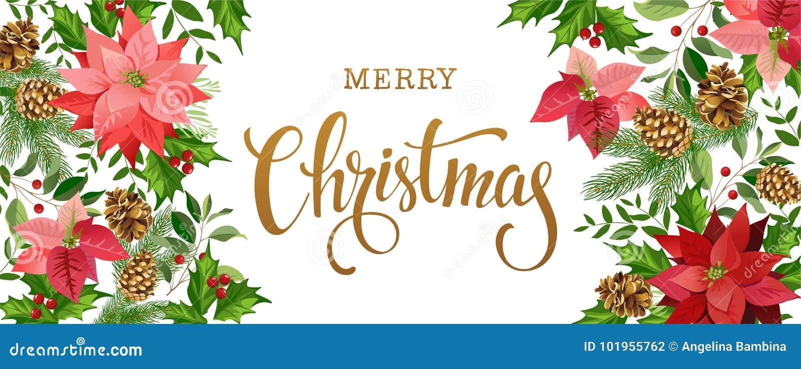 Состав дизайна рождества poinsettia, ветвей ели, конусов, падуба и других заводов Крышка, приглашение, знамя
